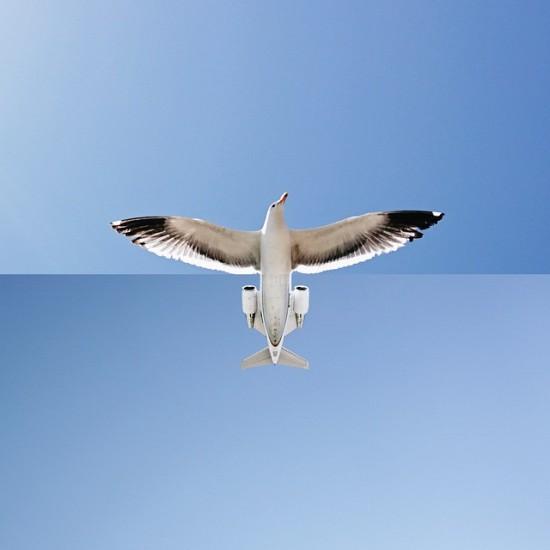 hem-ucak-hem-kuş